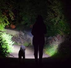 dog walking head torch